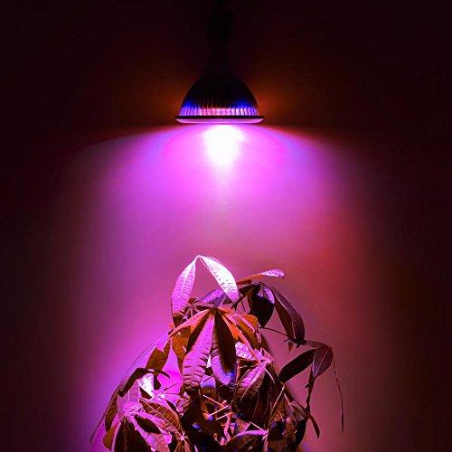 Alite Advanced LED Plant Grow Light Review ~ The Suburban Jungle